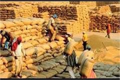 wheat procurement starts in punjab from april 15