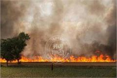 fire destroyed 25 acres of wheat crop