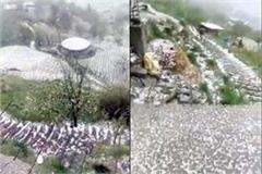 havoc-of-hailstorm-in-upper-shimla