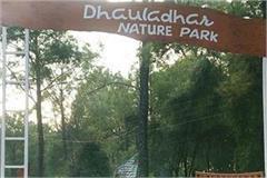 palampur corona virus gopalpur zoo high alert