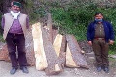 forest department caught 28 logs of tree in the forest