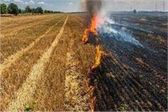 handle wheat stalks in the fields instead of setting them on fire p a u