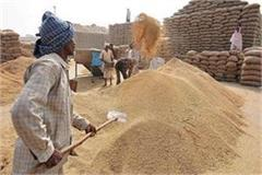 27th day of wheat procurement in punjab