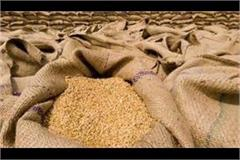 1 32 186 metric tonnes of wheat procured in punjab