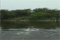 seeing a drowning person in the canal the young man made a jump see video