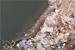 huge python came out of gurugram canal