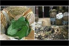banarasi paan business dies in lockdown loss of 25 30 lakhs per day