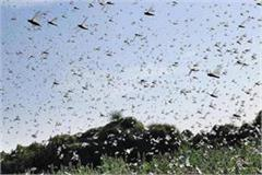 a team of locusts from pakistan attacked in up alerts issued in districts