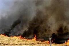 13 acres of wheat stalks burned to ashes in samrala