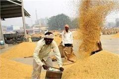 662331 mt of wheat procured on 17th day of procurement in punjab
