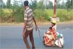 the laborer walked 800 km with the pregnant wife in balaghat