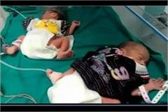 a woman gives birth to three children in rohtak