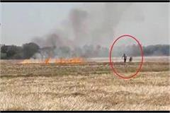 agriculture department imposed fine on farmer who burnt residue in fields