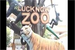 lucknow zoo opens after 4 stages of lockdown