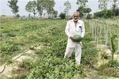 farmer grows watermelon without seeds in panipat