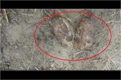 police captured 2 hand grenades found in cremation ground while measuring land