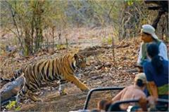 bandhavgarh s lock gate opened today for tigers