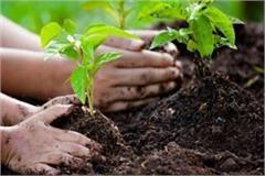 do not consider tree plantation as a formality mandalayukta