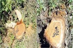 axe run on 5 tree in forest 4 arrested