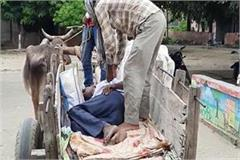 up  bullock cart  becomes ambulance for sick patient
