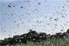 high alert issued on grasshopper party attack in punjab