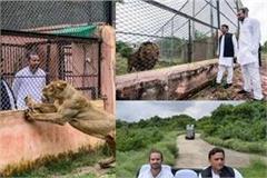akhilesh took a tour of tej pratap yadav in etawah safari park
