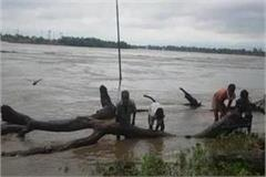 people taking wood out of the river putting their lives at risk