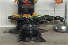6 feet black snake wrapped in pagoda from nandi