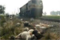 painful 14 cows cut off from the train in the grip of goods train