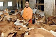 yogi government will give cow to parents of undernourished children