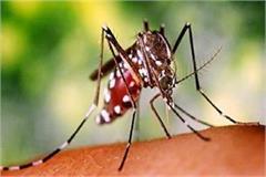 dengue malaria prevention health department