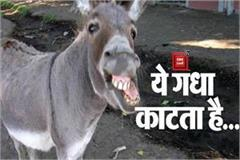 omg this is a biting ass in shahdol