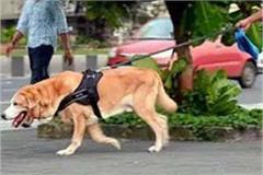 se aplicará un impuesto de 1000 rupias a la cría de perros
