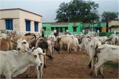 up police busts cow dynasty gang 8 women arrested