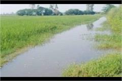 thousands of acres of crop worsting due to lack of rainwater drainage