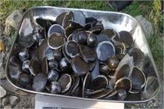 kullu nepali charas recovered