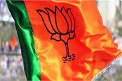 bjp s upper hand in mandi s urban bodies elections