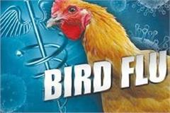 poultry owners panic due to outbreak of bird flu