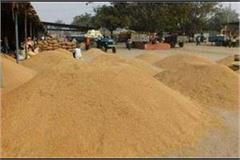 punjab created a record for paddy procurement across the country