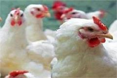 important decision taken after confirmation of bird flu in punjab