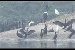 agra s keetham lake is buzzing with foreign migratory
