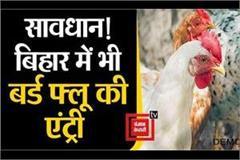 entry of bird flu also in bihar