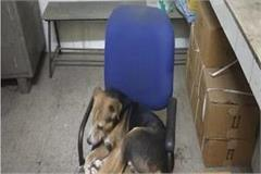 health department s gross negligence dog sitting in doctor s chair