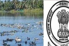 punjab government issued an order regarding bird flu