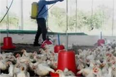mathura district administration strict about bird flu
