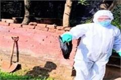 bird flu infection found in a sample of crows sent to muzaffarnagar