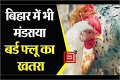 alert issued for bird flu in bihar