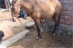 horse disease in 2 villages of ambala health department fully alert