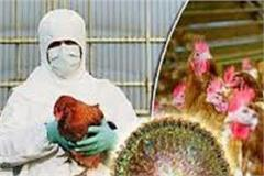 first case bird flu in punjab