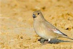 three day state bird festival to be held in jamui